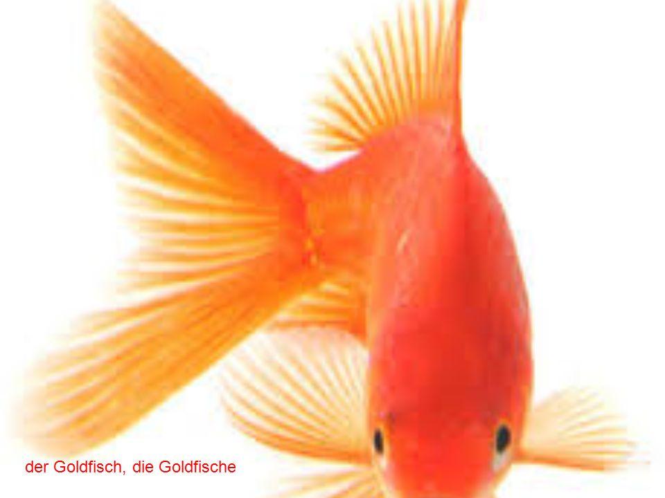 der Goldfisch, die Goldfische