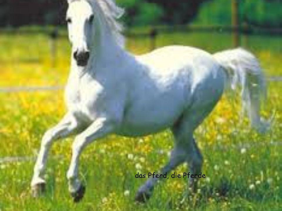 das Pferd, die Pferde