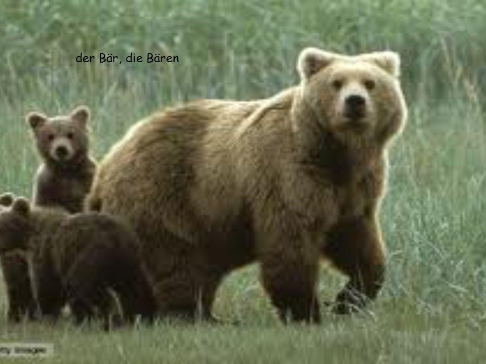der Bär, die Bären
