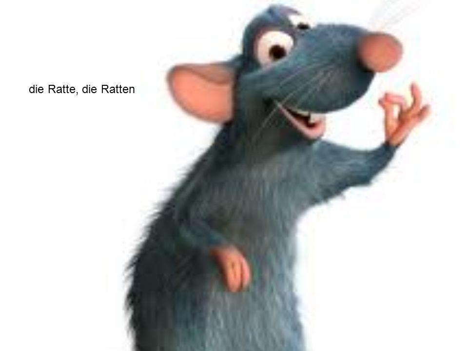 die Ratte, die Ratten
