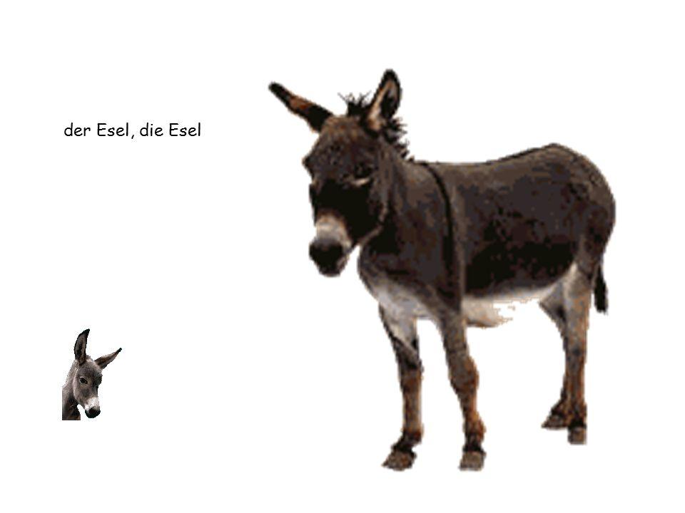 der Esel, die Esel