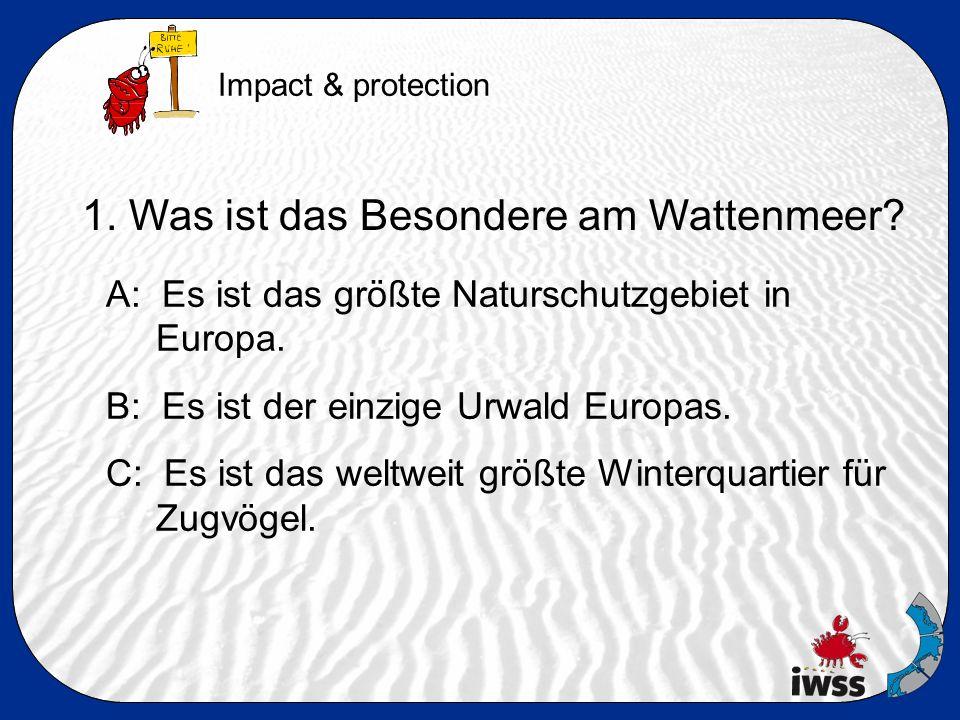 1. Was ist das Besondere am Wattenmeer. A: Es ist das größte Naturschutzgebiet in Europa.