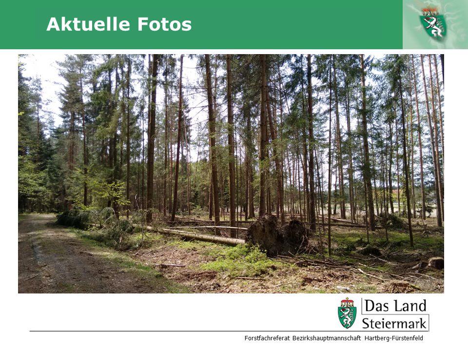 Autor Aktuelle Fotos Forstfachreferat Bezirkshauptmannschaft Hartberg-Fürstenfeld