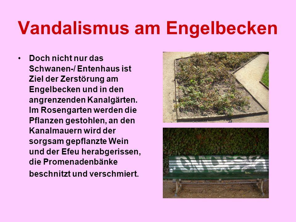 Vandalismus am Engelbecken Doch nicht nur das Schwanen-/ Entenhaus ist Ziel der Zerstörung am Engelbecken und in den angrenzenden Kanalgärten. Im Rose