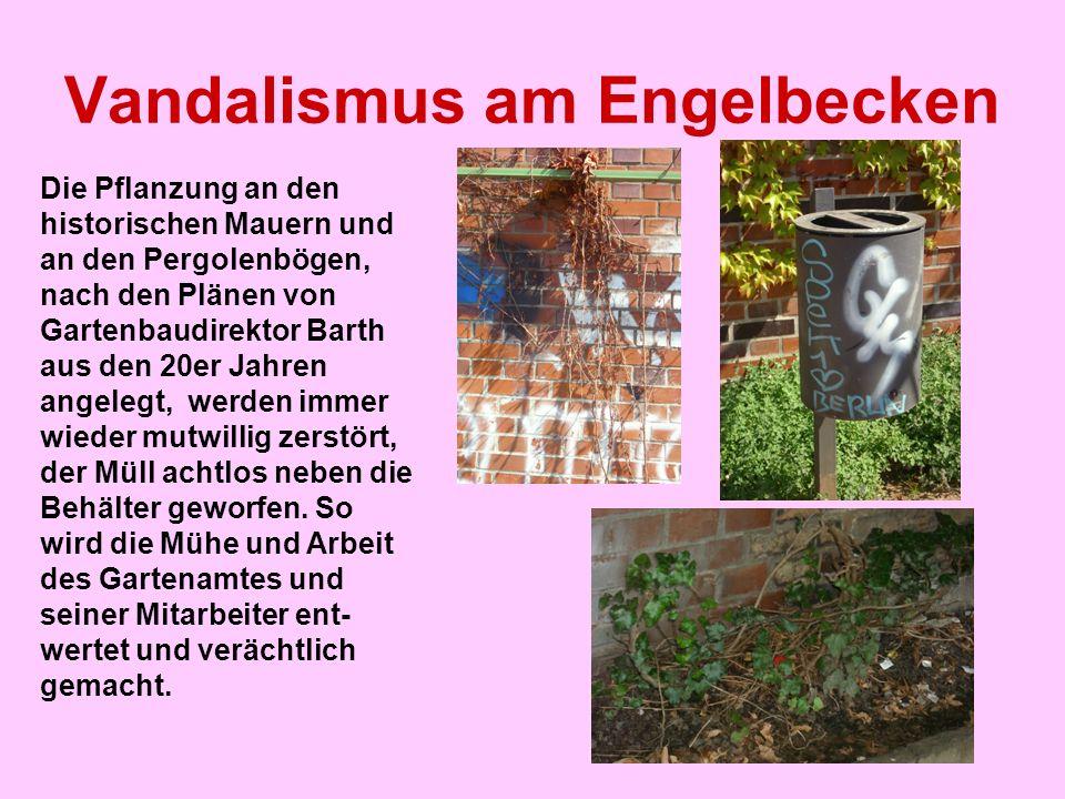 Vandalismus am Engelbecken Die Pflanzung an den historischen Mauern und an den Pergolenbögen, nach den Plänen von Gartenbaudirektor Barth aus den 20er