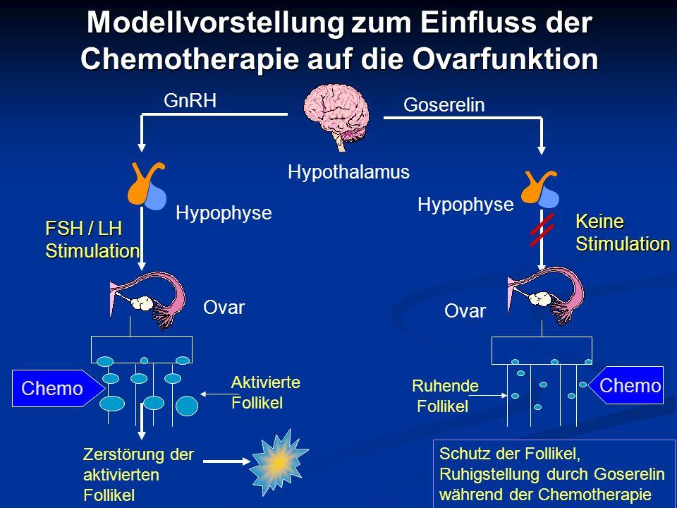 Modellvorstellung zum Einfluss der Chemotherapie auf die Ovarfunktion Hypothalamus Hypophyse Goserelin Keine Stimulation Ovar Ruhende Follikel Schutz