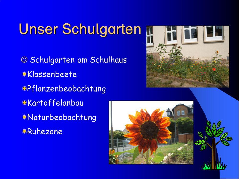  Schulgarten am Schulhaus  Klassenbeete  Pflanzenbeobachtung  Kartoffelanbau  Naturbeobachtung  Ruhezone