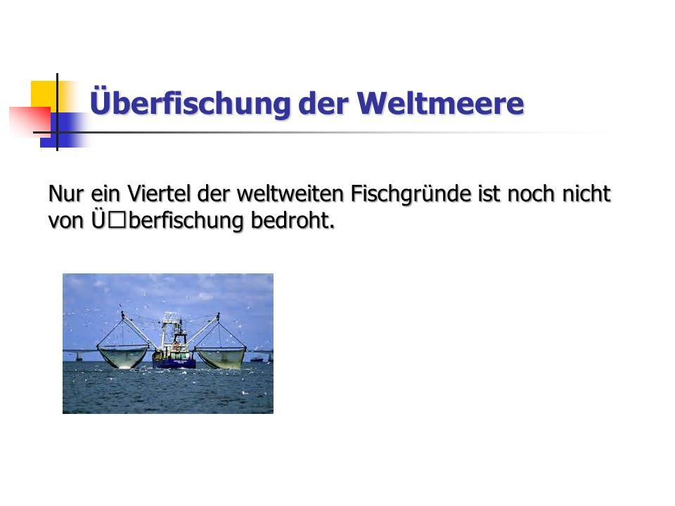 Überfischung der Weltmeere Nur ein Viertel der weltweiten Fischgründe ist noch nicht von ܜberfischung bedroht.