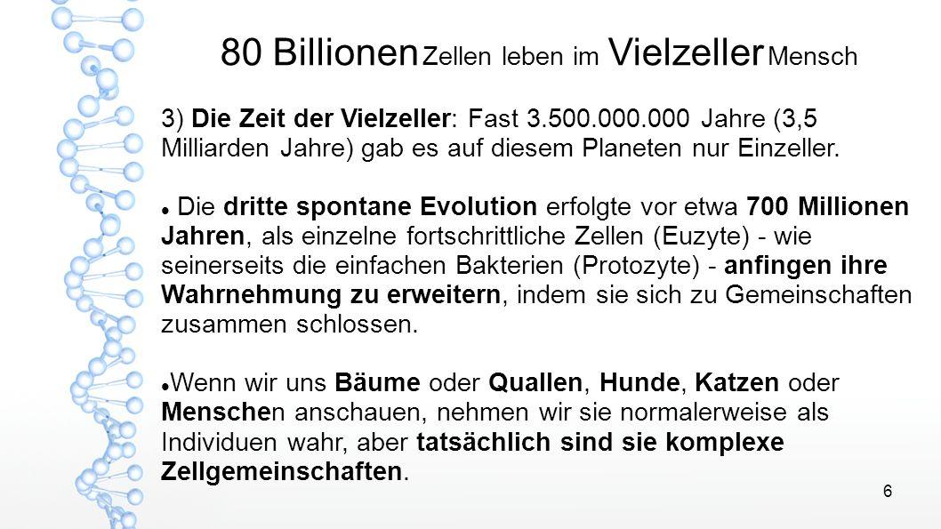 6 80 Billionen Zellen leben im Vielzeller Mensch 3) Die Zeit der Vielzeller: Fast 3.500.000.000 Jahre (3,5 Milliarden Jahre) gab es auf diesem Planete