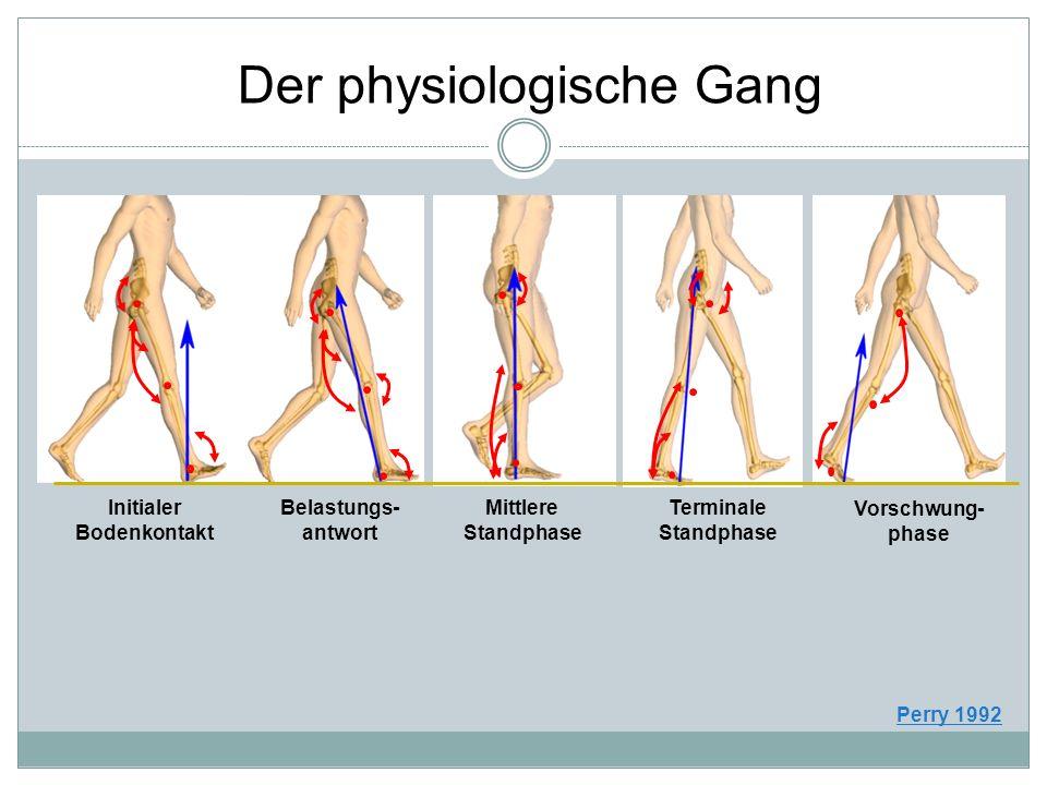 Initialer Bodenkontakt Belastungs- antwort Mittlere Standphase Terminale Standphase Vorschwung- phase Der physiologische Gang Perry 1992