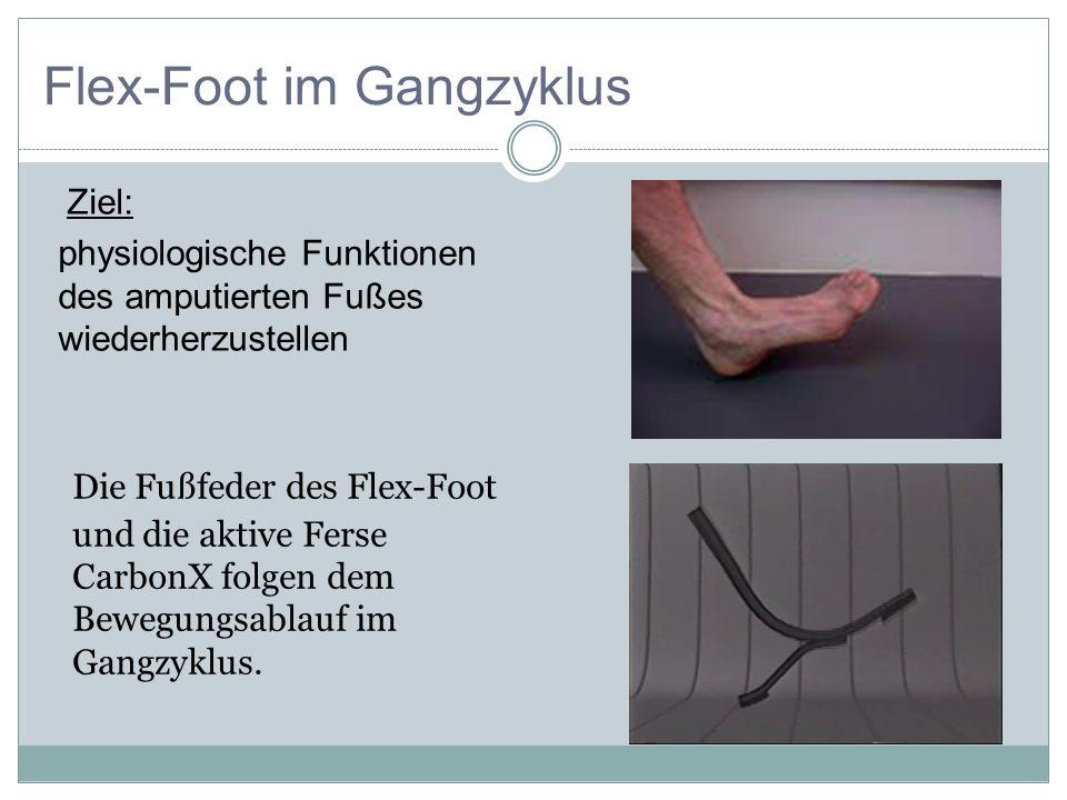 Die Fußfeder des Flex-Foot und die aktive Ferse CarbonX folgen dem Bewegungsablauf im Gangzyklus. Flex-Foot im Gangzyklus Ziel: physiologische Funktio