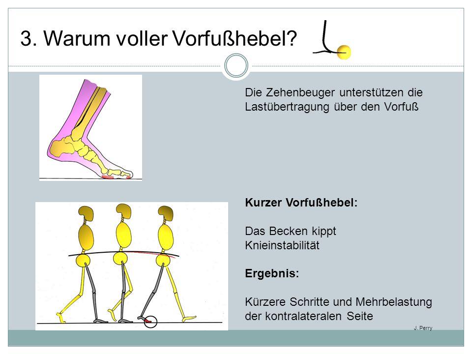 Die Zehenbeuger unterstützen die Lastübertragung über den Vorfuß Kurzer Vorfußhebel: Das Becken kippt Knieinstabilität Ergebnis: Kürzere Schritte und