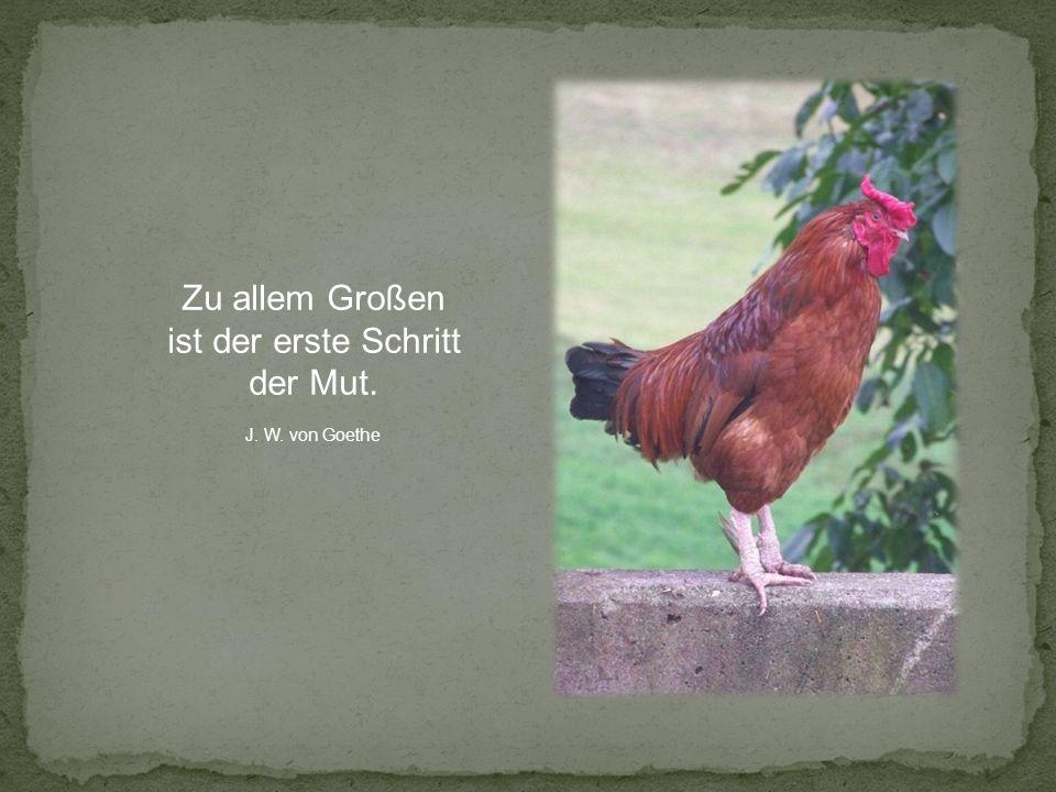 Zu allem Großen ist der erste Schritt der Mut. J. W. von Goethe