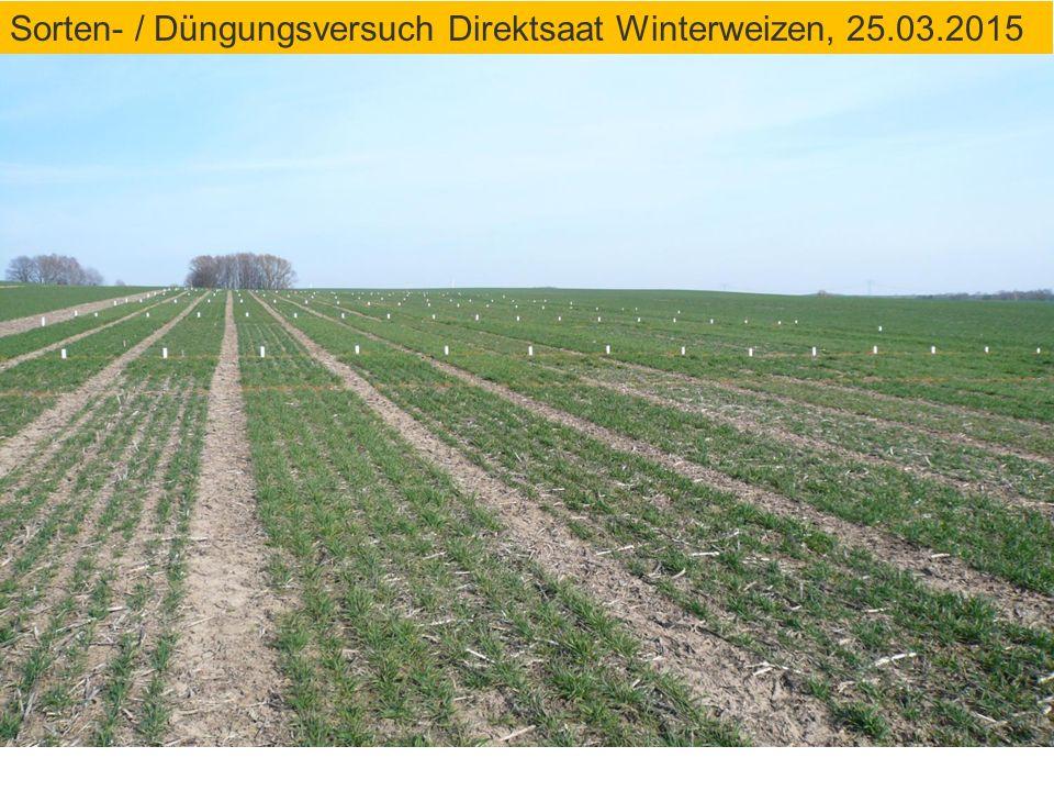 Sorten- / Düngungsversuch Direktsaat Winterweizen, 25.03.2015