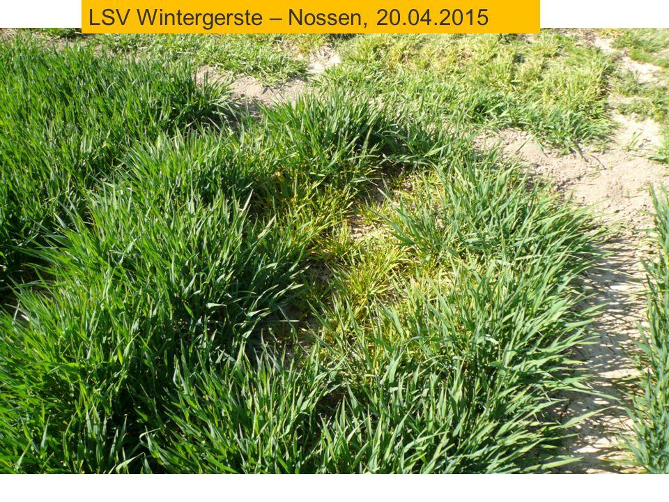 LSV Wintergerste – Nossen, 20.04.2015