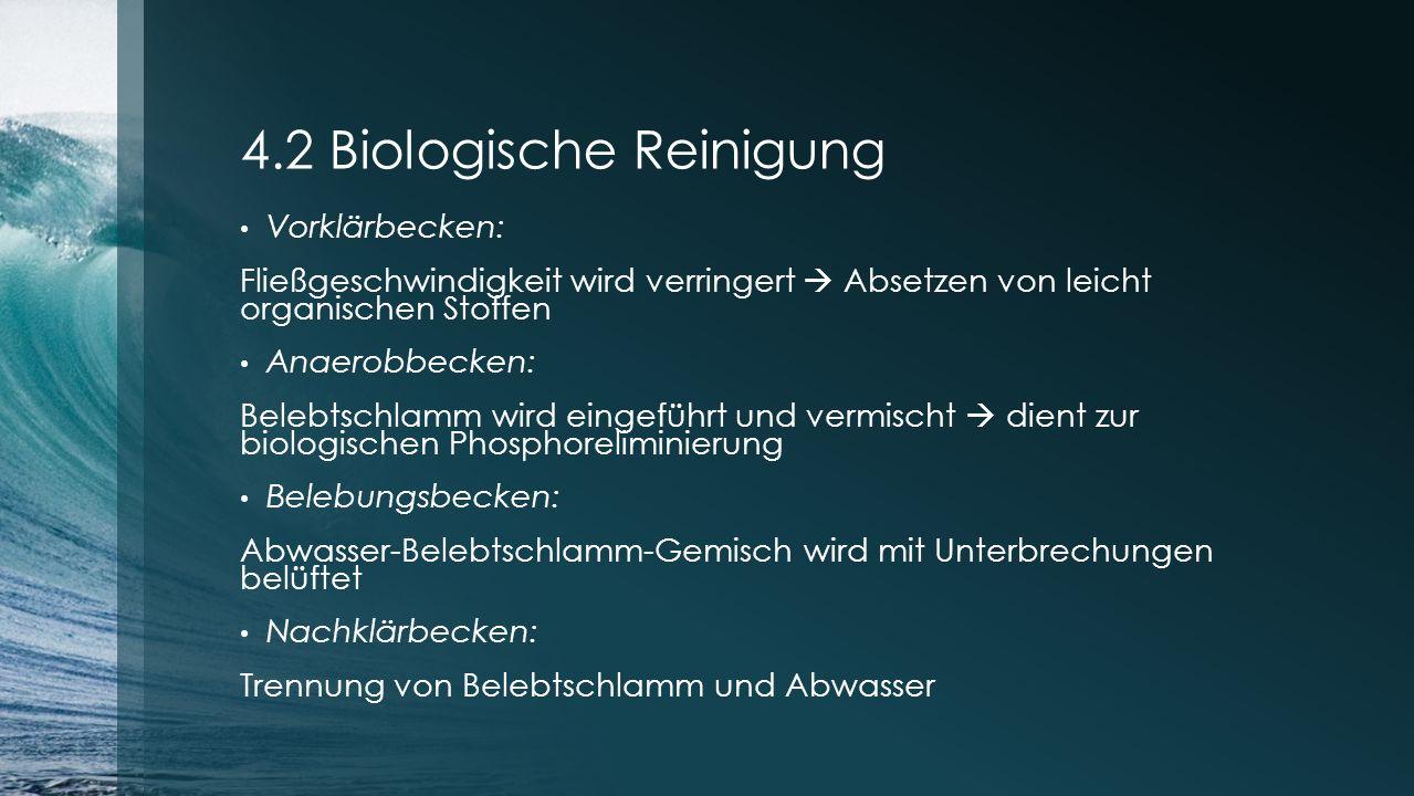 4.2 Biologische Reinigung Vorklärbecken: Fließgeschwindigkeit wird verringert  Absetzen von leicht organischen Stoffen Anaerobbecken: Belebtschlamm w