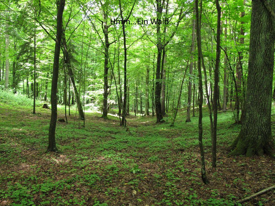 Hmm…Ein Wald…