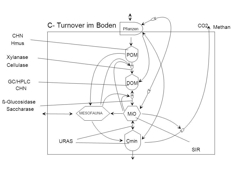 MESOFAUNA Pflanzen DOM POM Cmin MiO C- Turnover im Boden CHN Xylanase Cellulase GC/HPLC Hmus ß-Glucosidase Saccharase URAS SIR CHN CO2 Methan