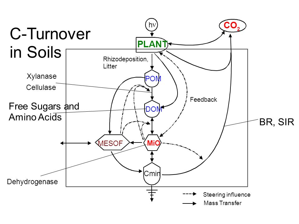 h Xylanase Rhizodeposition, Litter Feedback Mass Transfer Steering influence Dehydrogenase BR, SIR Free Sugars and Amino Acids MESOF Cellulase C-Turnover in Soils