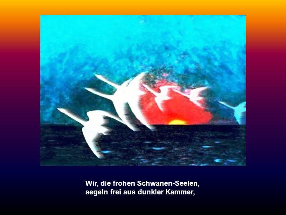 Wir, die frohen Schwanen-Seelen, segeln frei aus dunkler Kammer,