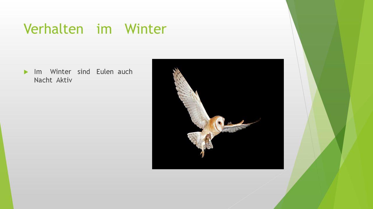 Verhalten im Winter  Im Winter sind Eulen auch Nacht Aktiv