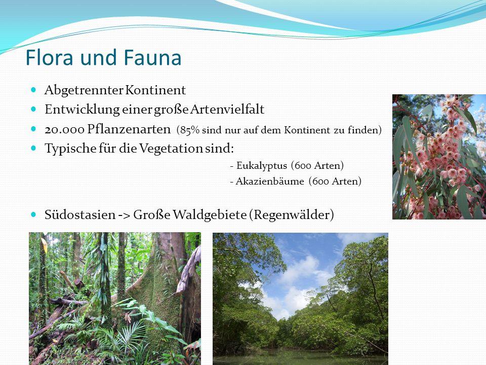 Flora und Fauna Abgetrennter Kontinent Entwicklung einer große Artenvielfalt 20.000 Pflanzenarten (85% sind nur auf dem Kontinent zu finden) Typische für die Vegetation sind: - Eukalyptus (600 Arten) - Akazienbäume (600 Arten) Südostasien -> Große Waldgebiete (Regenwälder)