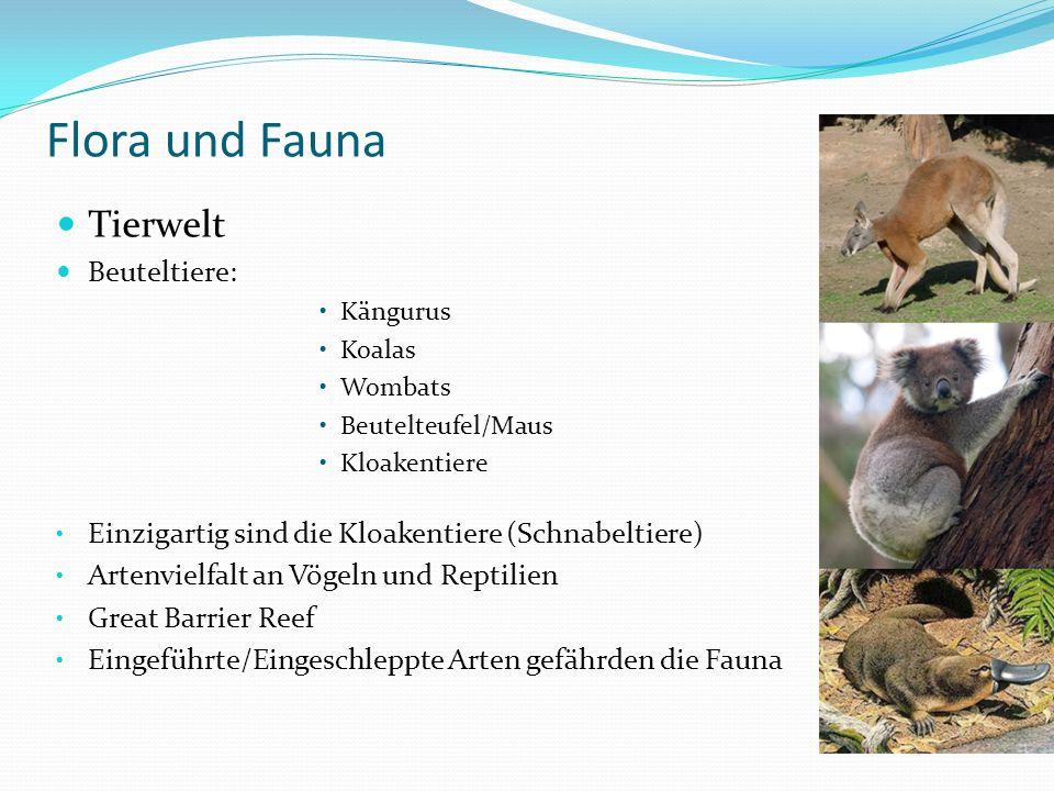 Flora und Fauna Tierwelt Beuteltiere: Kängurus Koalas Wombats Beutelteufel/Maus Kloakentiere Einzigartig sind die Kloakentiere (Schnabeltiere) Artenvielfalt an Vögeln und Reptilien Great Barrier Reef Eingeführte/Eingeschleppte Arten gefährden die Fauna