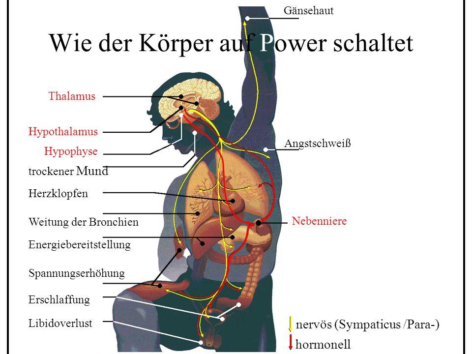 Progressive Muskelentspannung Charakteristika m Universelle Anwendbarkeit m Kombinierbar mit Psycho- therapiemethoden m Rasch eintretende Wirksamkeit m Einfach zu vermitteln und zu erlernen m Aktiv-muskuläre Vorgehensweise m Universelle Anwendbarkeit m Kombinierbar mit Psycho- therapiemethoden m Rasch eintretende Wirksamkeit m Einfach zu vermitteln und zu erlernen m Aktiv-muskuläre Vorgehensweise