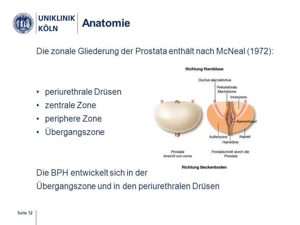 Seite 12 Anatomie Die zonale Gliederung der Prostata enthält nach McNeal (1972): periurethrale Drüsen zentrale Zone periphere Zone Übergangszone Die B