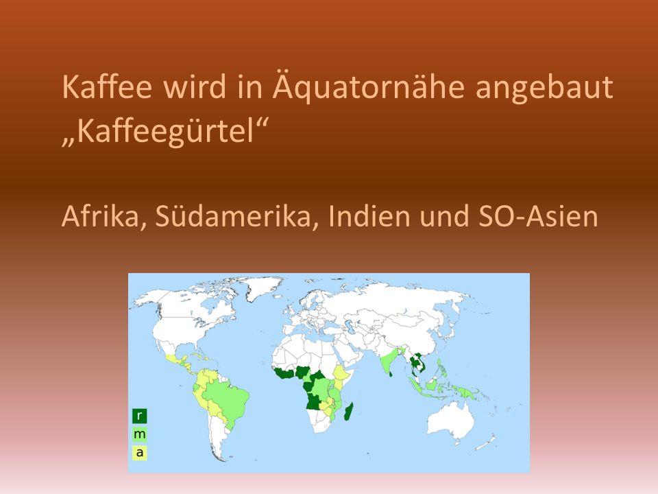 """Kaffee wird in Äquatornähe angebaut """"Kaffeegürtel"""" Afrika, Südamerika, Indien und SO-Asien"""