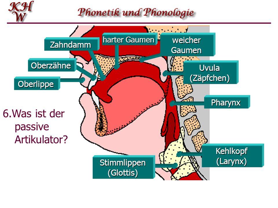 Oberlippe Oberzähne Zahndamm harter Gaumen weicher Gaumen Stimmlippen (Glottis) Pharynx Uvula (Zäpfchen) Kehlkopf (Larynx) 6.Was ist der passive Artikulator