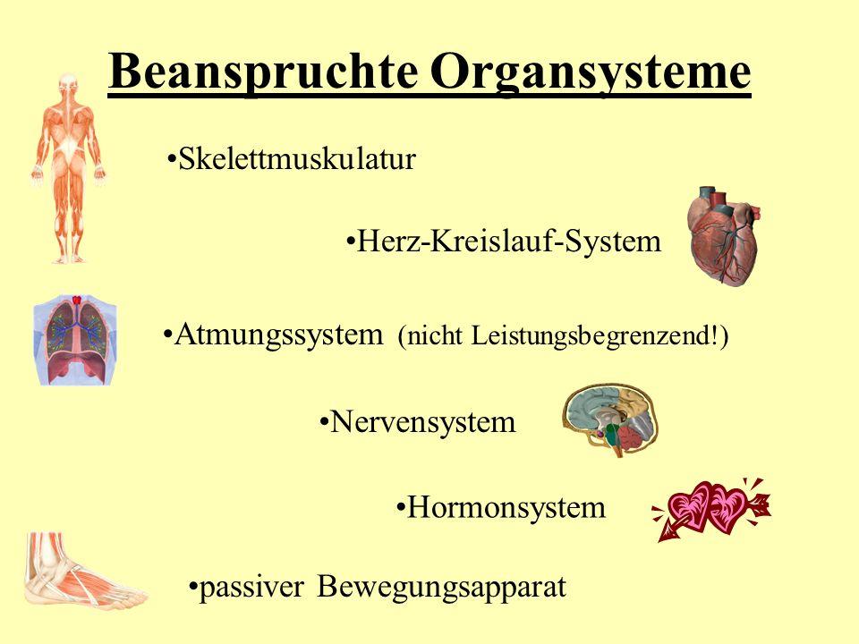 Beanspruchte Organsysteme Skelettmuskulatur Herz-Kreislauf-System Atmungssystem (nicht Leistungsbegrenzend!) Nervensystem Hormonsystem passiver Bewegu