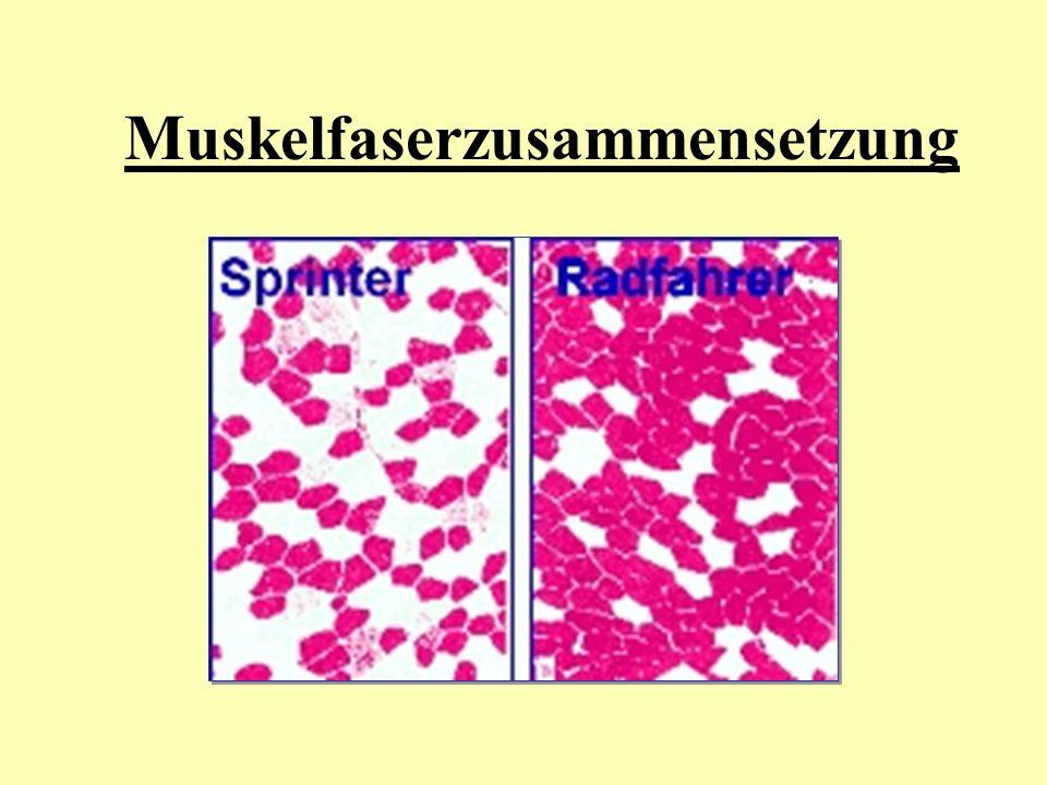 Muskelfaserzusammensetzung