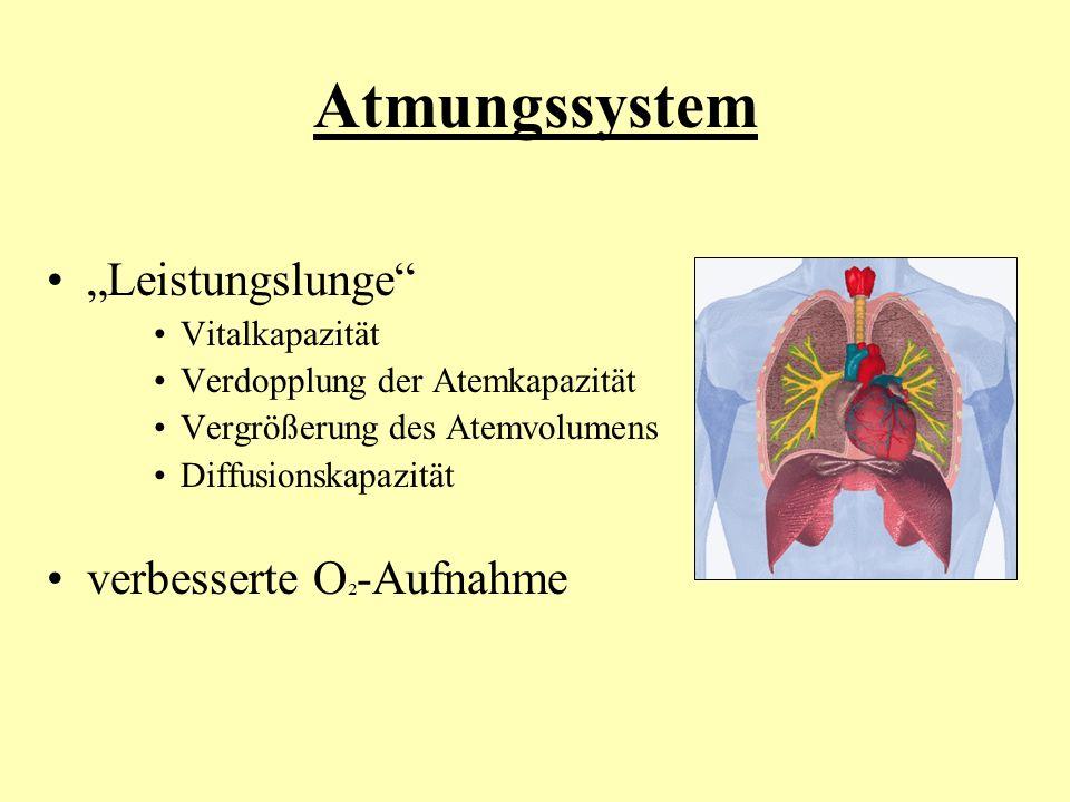 """Atmungssystem """"Leistungslunge"""" Vitalkapazität Verdopplung der Atemkapazität Vergrößerung des Atemvolumens Diffusionskapazität verbesserte O ² -Aufnahm"""