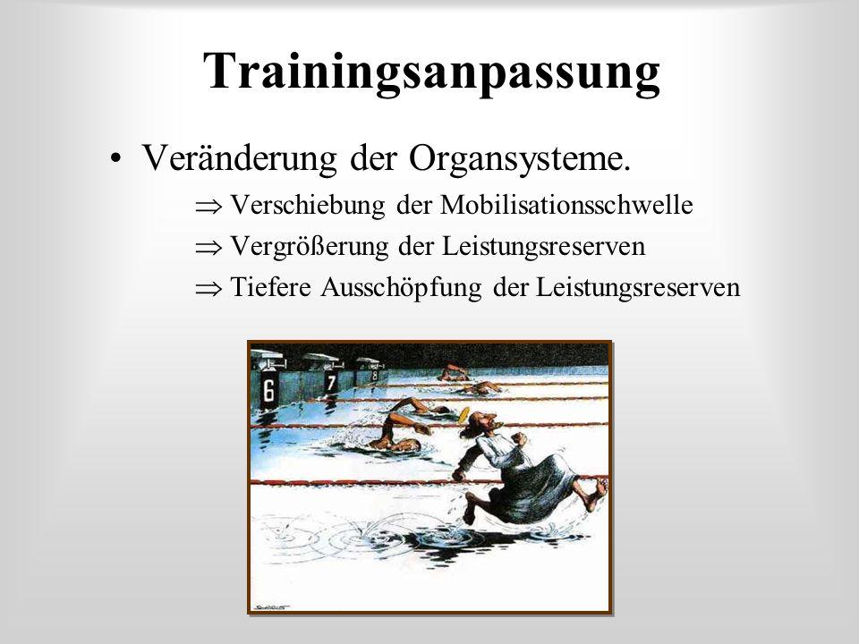 Trainingsanpassung Veränderung der Organsysteme.  Verschiebung der Mobilisationsschwelle  Vergrößerung der Leistungsreserven  Tiefere Ausschöpfung