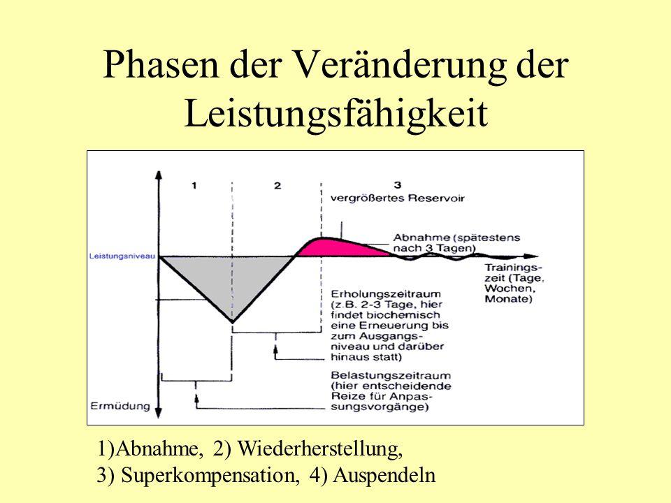 Vor- und Nachteile der Energiebereitstellungsarten - Laktatbildung+ keine Laktatbildung - die Gesamtenergiemenge ist relativ klein 2mol ATP/mol Glukose + die bereitgestellte Gesamt- energiemenge ist relativ groß 36mol ATP/mol Glukose 130mol ATP/mol Fettsäure + die pro Zeiteinheit freigesetzte Energiemenge ist relativ groß - die pro Zeiteinheit freigesetzte Energiemenge ist relativ klein + Energiebereitstellung erfolgt relativ schnell - Energiebereitstellung erfolgt relativ langsam anaerobe Glykolyseaerobe Oxidation