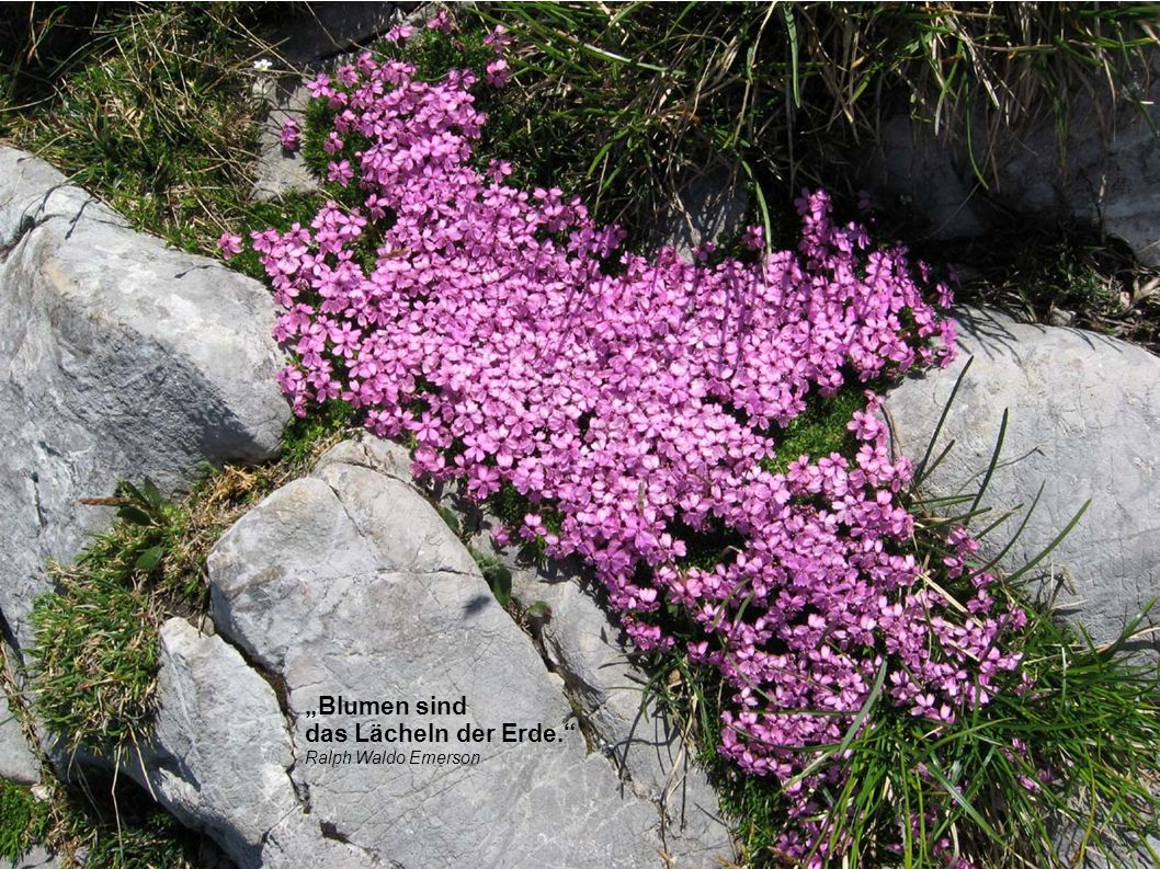 """""""Blumen sind das Lächeln der Erde. Ralph Waldo Emerson"""