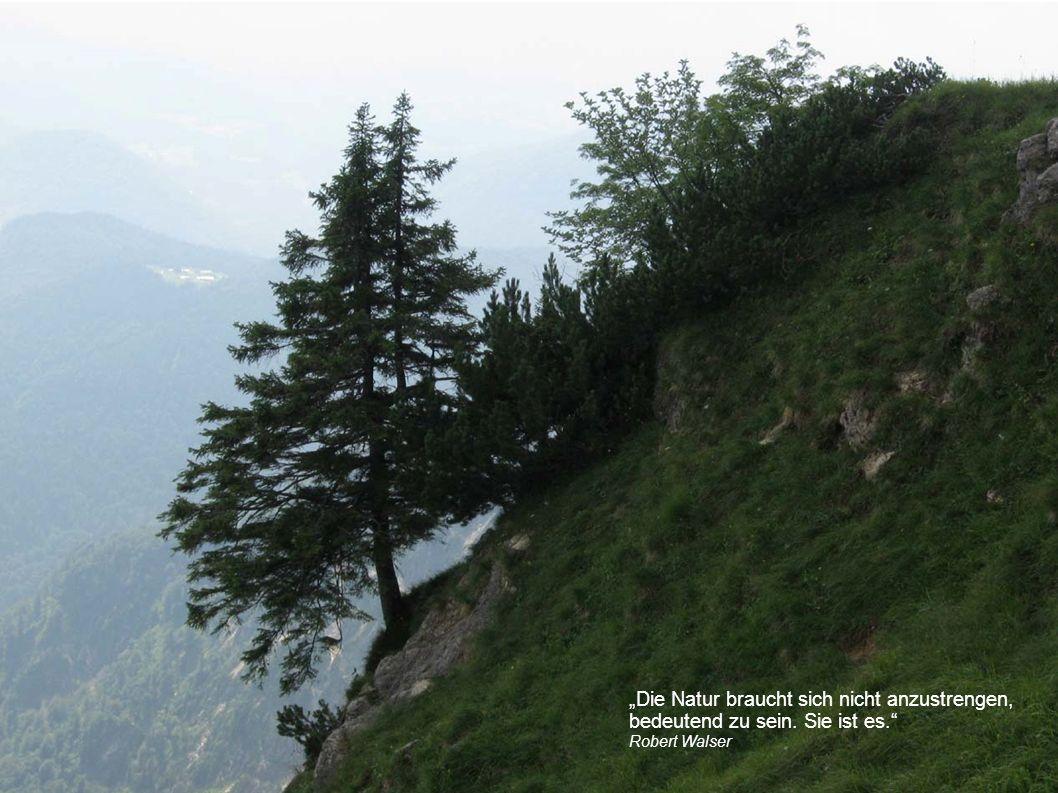 """""""Die Natur braucht sich nicht anzustrengen, bedeutend zu sein. Sie ist es. Robert Walser"""