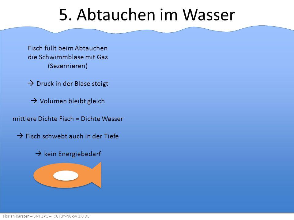 5. Abtauchen im Wasser Florian Karsten – BNT ZPG – (CC) BY-NC-SA 3.0 DE Fisch füllt beim Abtauchen die Schwimmblase mit Gas (Sezernieren)  Druck in d