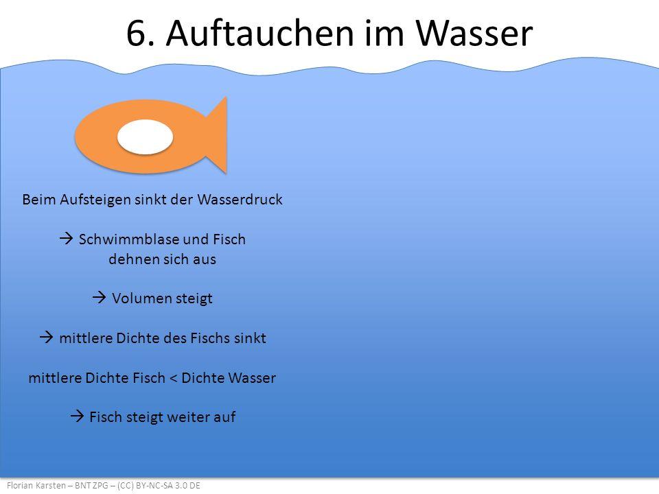 6. Auftauchen im Wasser Florian Karsten – BNT ZPG – (CC) BY-NC-SA 3.0 DE Beim Aufsteigen sinkt der Wasserdruck  Schwimmblase und Fisch dehnen sich au