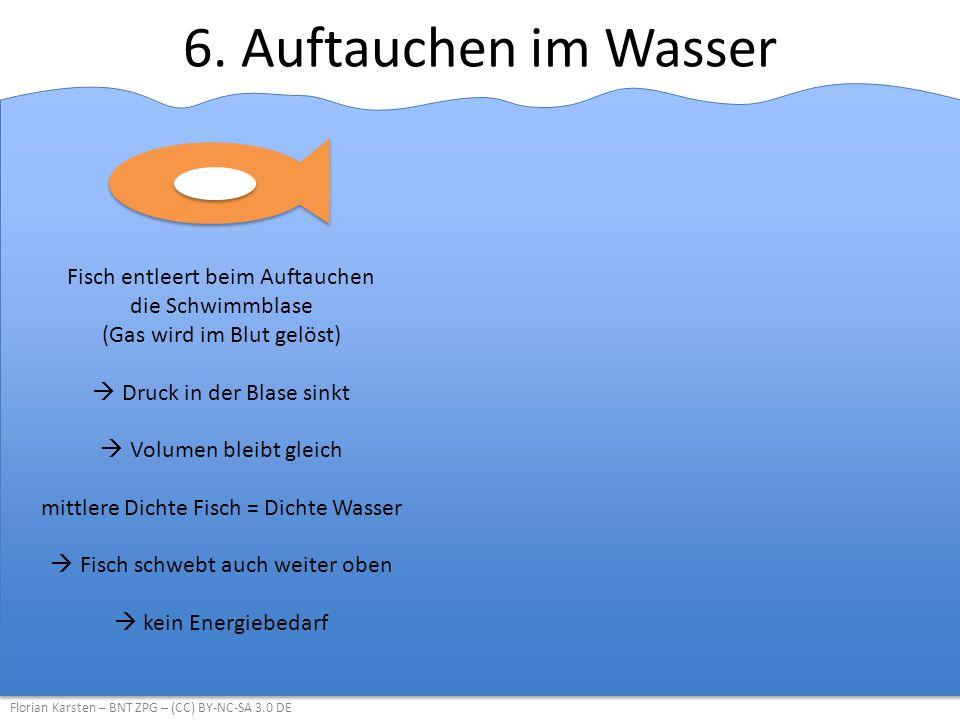 6. Auftauchen im Wasser Florian Karsten – BNT ZPG – (CC) BY-NC-SA 3.0 DE Fisch entleert beim Auftauchen die Schwimmblase (Gas wird im Blut gelöst)  D