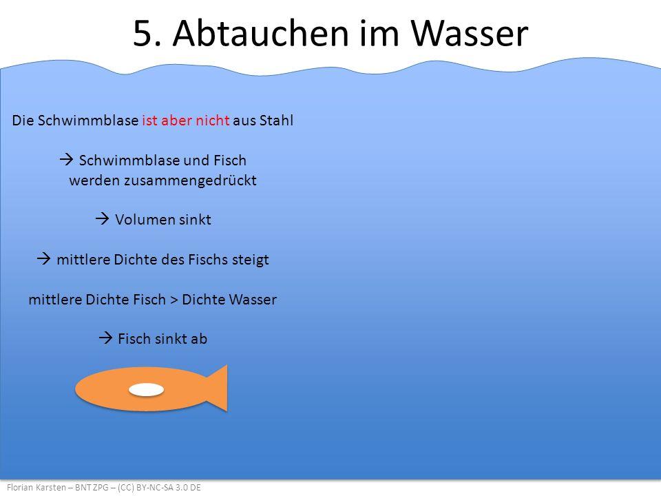 5. Abtauchen im Wasser Florian Karsten – BNT ZPG – (CC) BY-NC-SA 3.0 DE Die Schwimmblase ist aber nicht aus Stahl  Schwimmblase und Fisch werden zusa