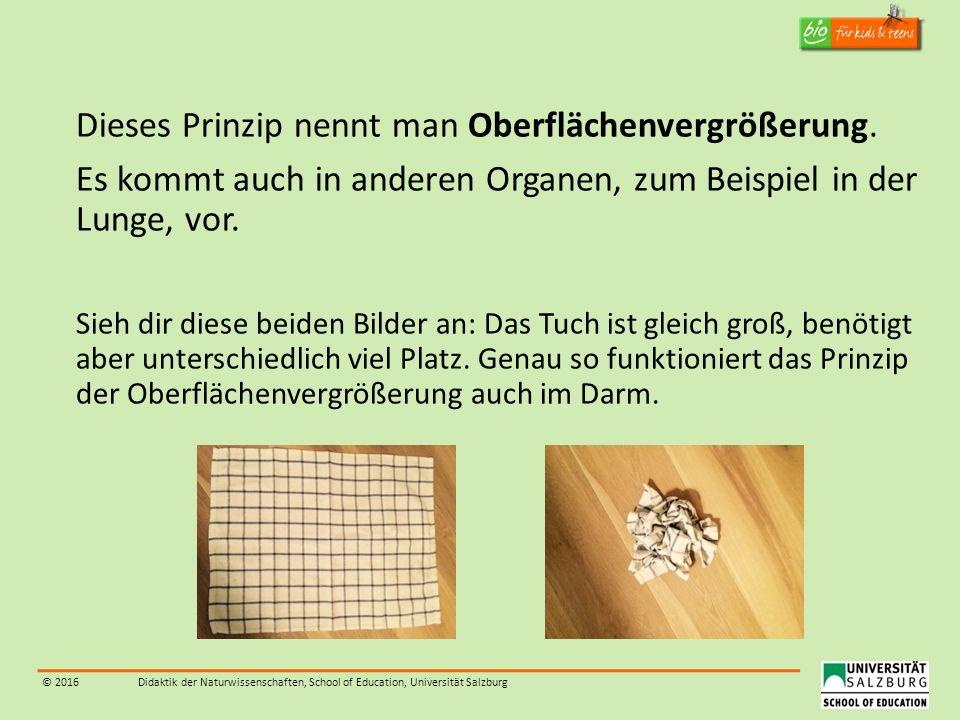 © 2016Didaktik der Naturwissenschaften, School of Education, Universität Salzburg Dieses Prinzip nennt man Oberflächenvergrößerung. Es kommt auch in a