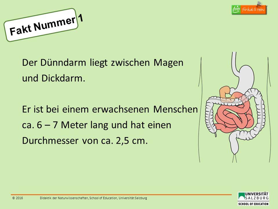 © 2016Didaktik der Naturwissenschaften, School of Education, Universität Salzburg Fakt Nummer 1 Der Dünndarm liegt zwischen Magen und Dickdarm. Er ist