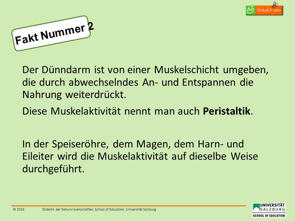 © 2016Didaktik der Naturwissenschaften, School of Education, Universität Salzburg Der Dünndarm ist von einer Muskelschicht umgeben, die durch abwechse