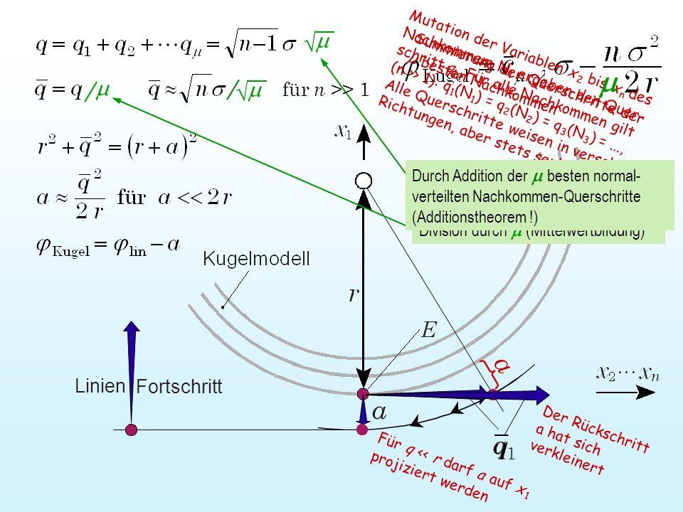 Für q << r darf a auf x 1 projiziert werden Mutation der Variablen x 2 bis x n des Nachkommem N 1 ergeben den Quer- schritt q 1. Für alle Nachkommen g