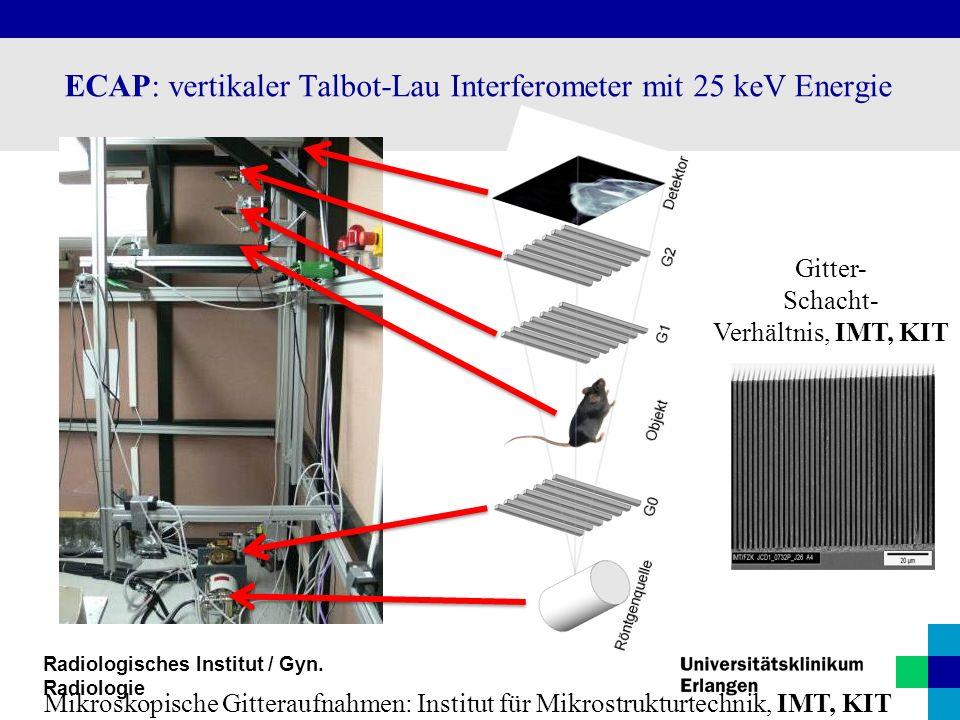 ECAP: vertikaler Talbot-Lau Interferometer mit 25 keV Energie Mikroskopische Gitteraufnahmen: Institut für Mikrostrukturtechnik, IMT, KIT Gitter- Scha