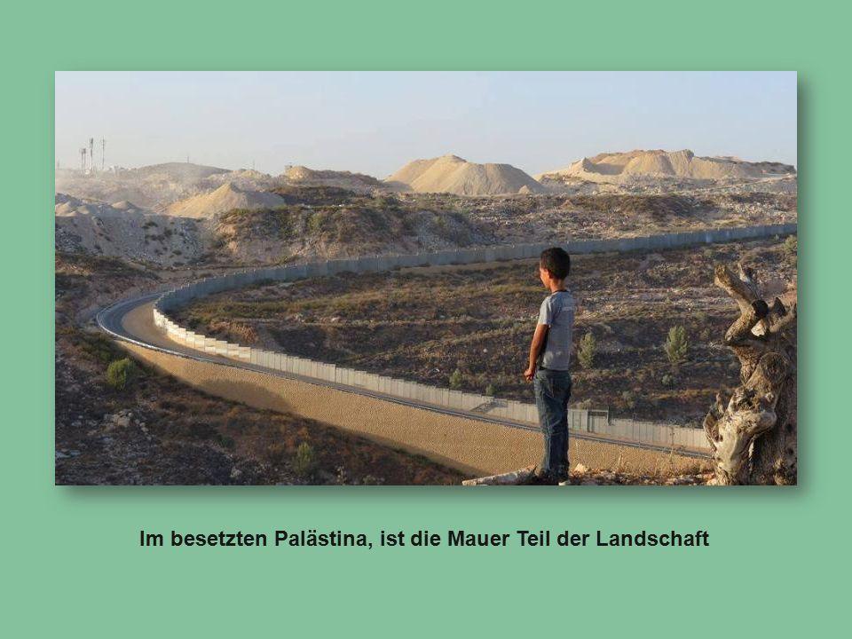 Im besetzten Palästina, ist die Mauer Teil der Landschaft
