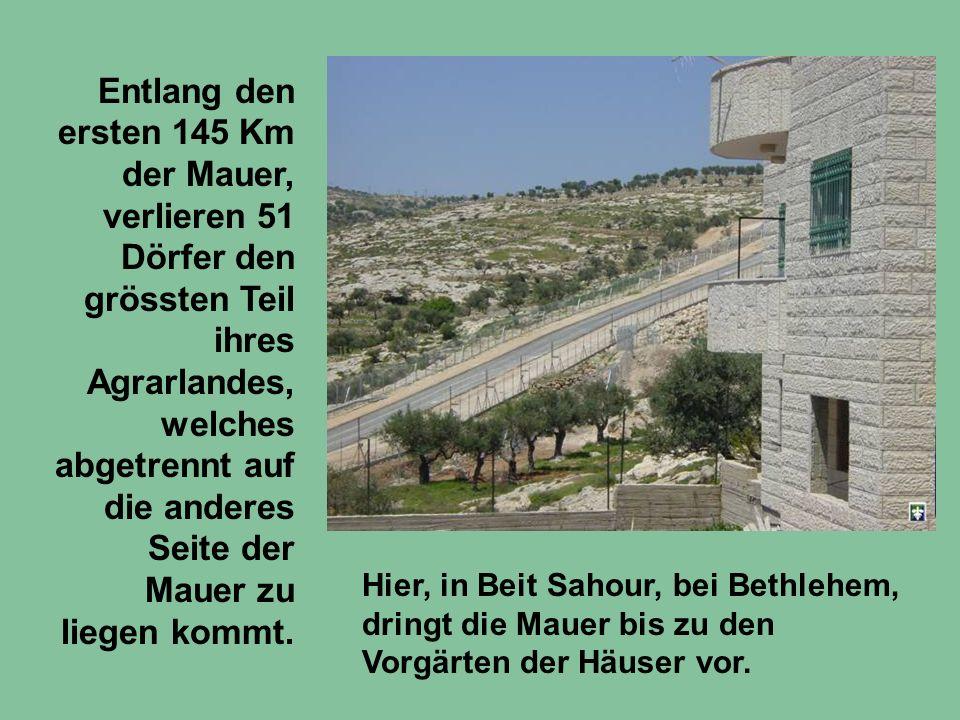 Entlang den ersten 145 Km der Mauer, verlieren 51 Dörfer den grössten Teil ihres Agrarlandes, welches abgetrennt auf die anderes Seite der Mauer zu li