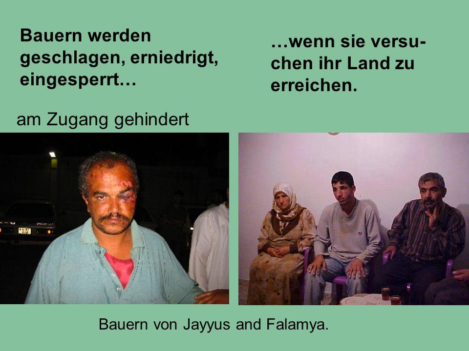 Bauern werden geschlagen, erniedrigt, eingesperrt… Bauern von Jayyus and Falamya. am Zugang gehindert …wenn sie versu- chen ihr Land zu erreichen.